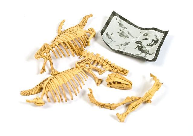 dino skeletten los